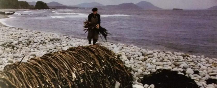 cropped-connemarra-seaweed.jpg